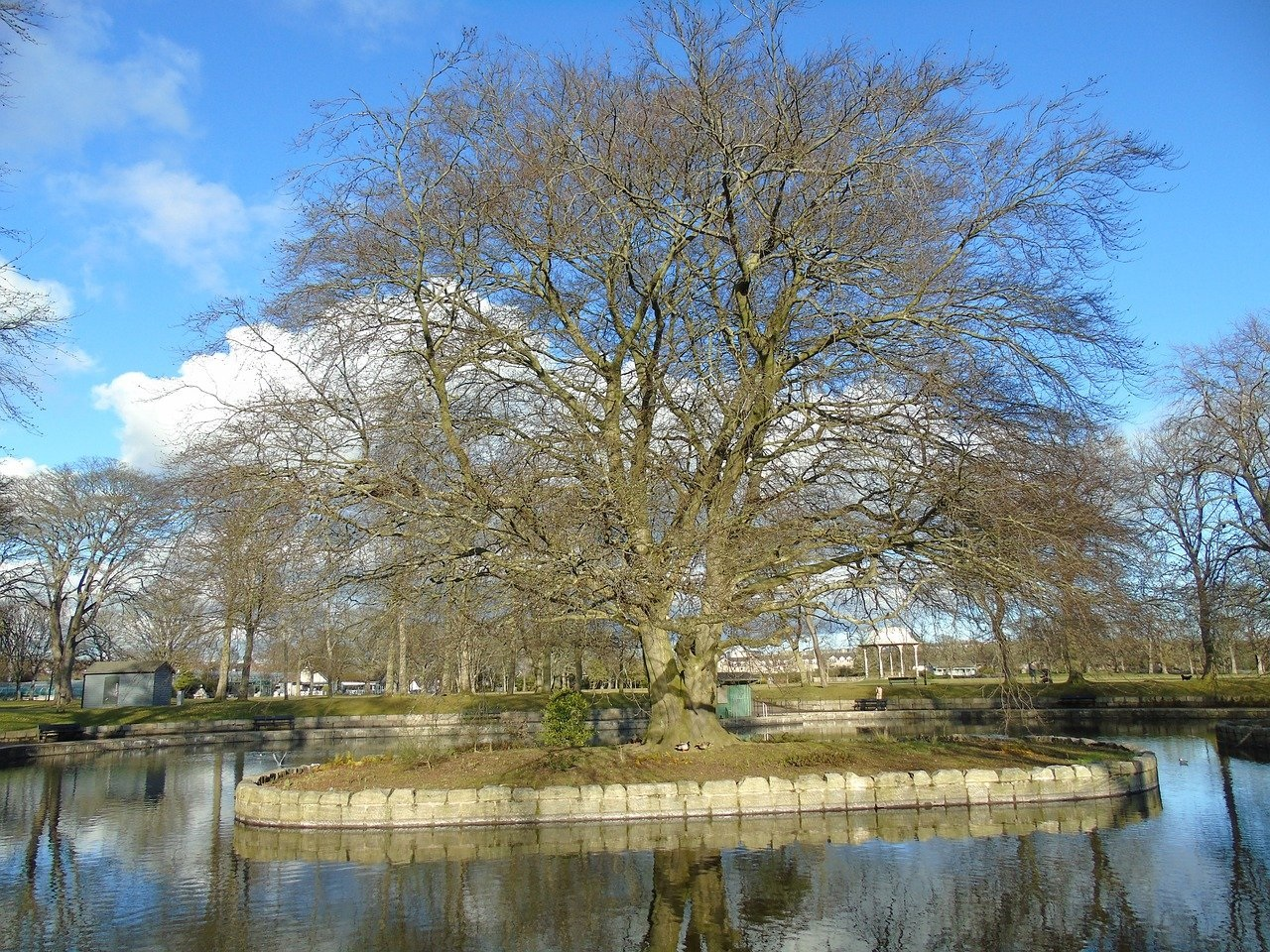 The pond at Duthie Park surrounded by trees