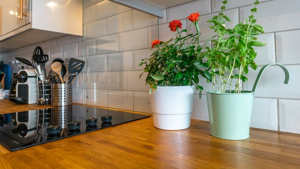 a kitchen worktop with a plant on it