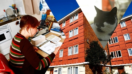 a person work, a building and a cat